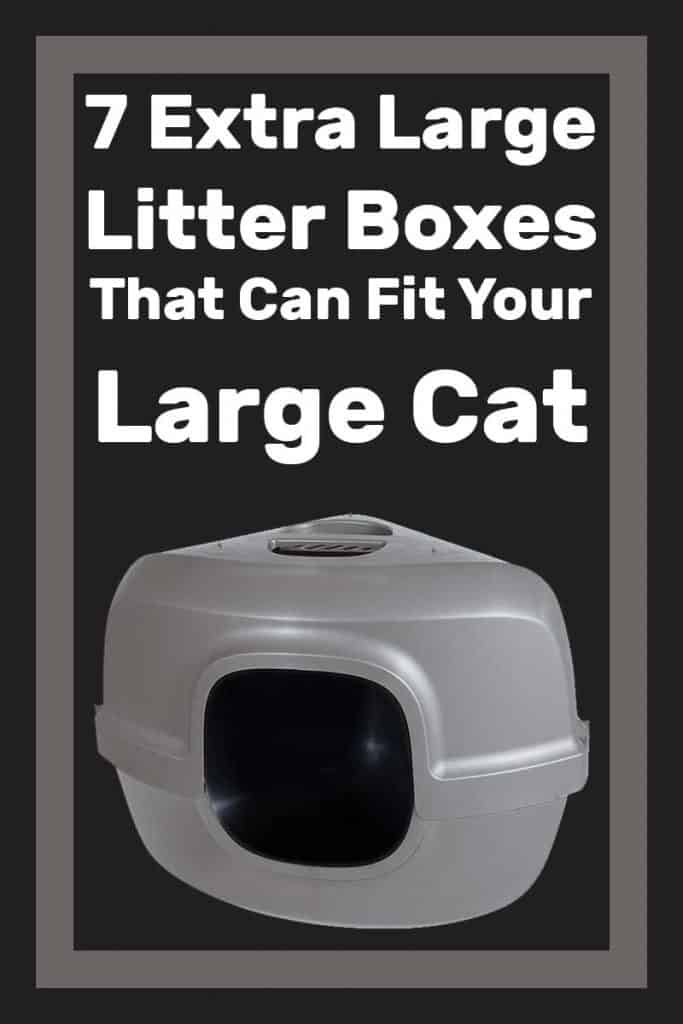 7 Extra Large Litter Boxes That Can Fit Your Large Cat