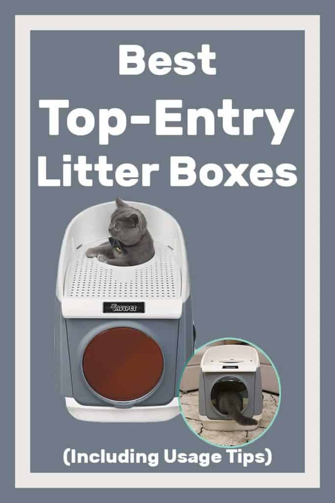 Best Top-Entry Litter Boxes (Including Usage Tips)