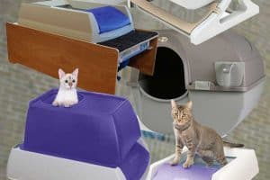 Read more about the article 12 Top Self-Cleaning Litter Boxes