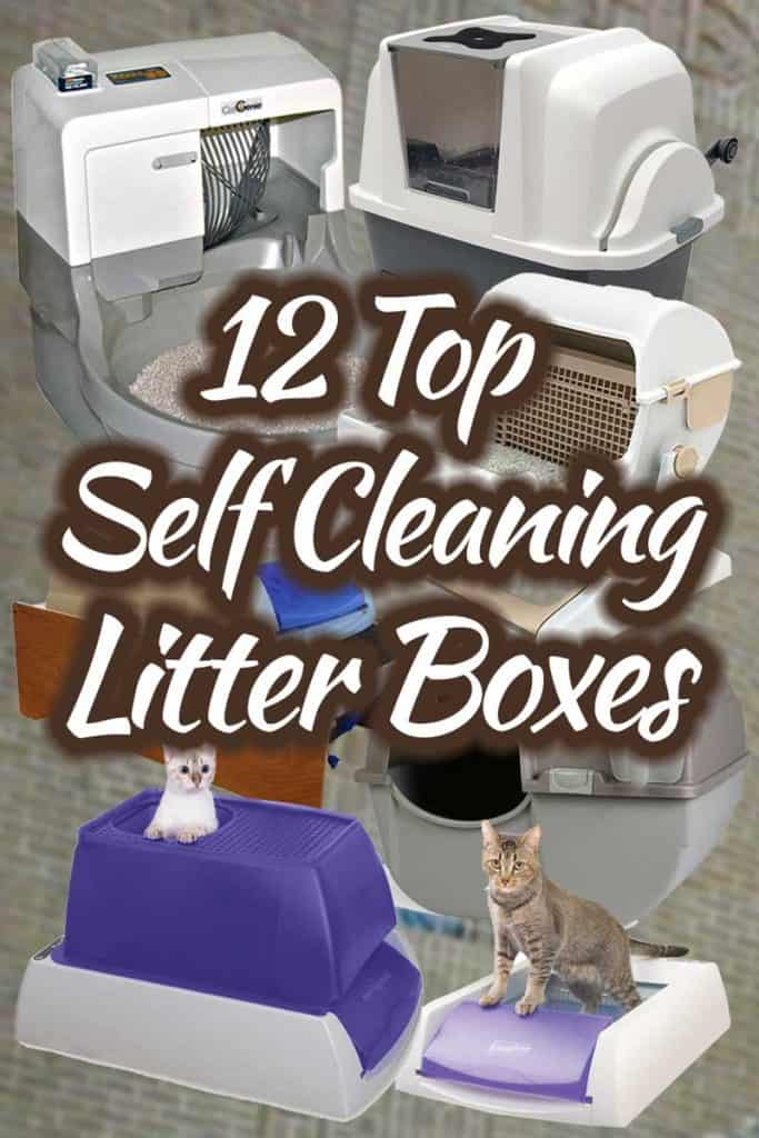 12 Top Self-Cleaning Litter Boxes
