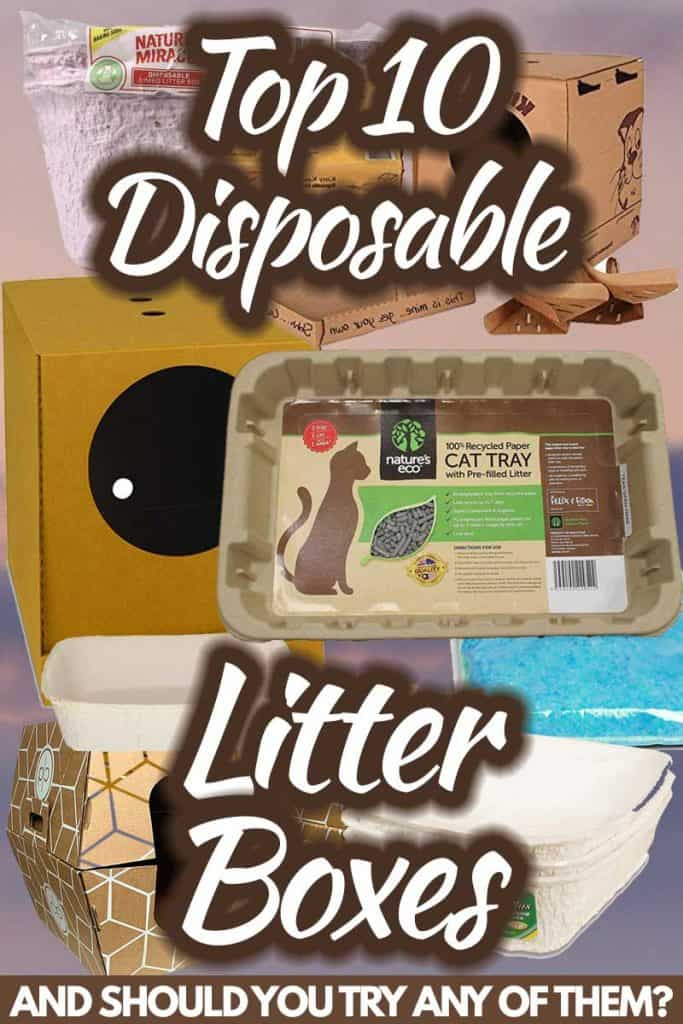 PIN Top 10 Disposable Litter Boxes (And Should You Try Any of Them)