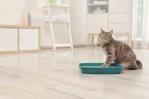 Read more about the article Does Cat Litter Attract Predators?
