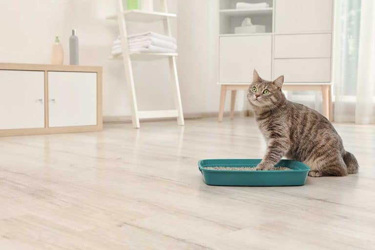 Does Cat Litter Attract Predators?