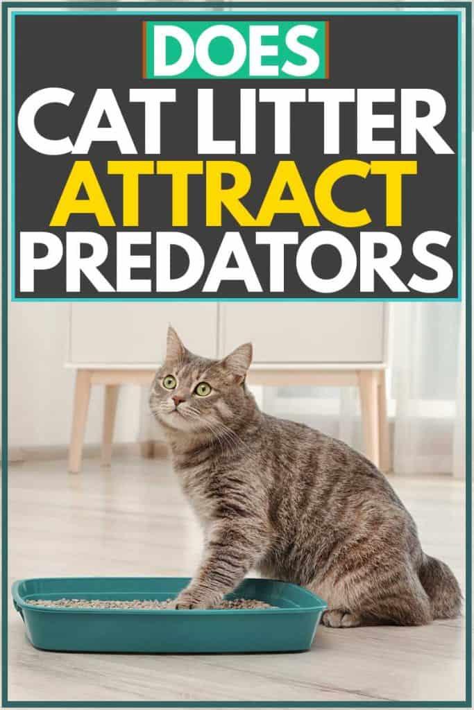 Cat putting paw at blue litter box, Does Cat Litter Attract Predators?