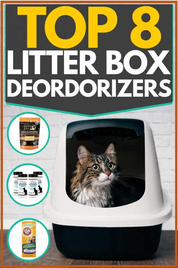 Cat peeping out of black and white litter box, Top 8 Litter Box Deodorizers