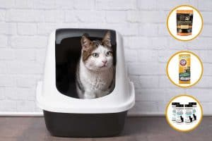 Some Types of Cat Litter are Flammable [Here's how to avoid the risk]