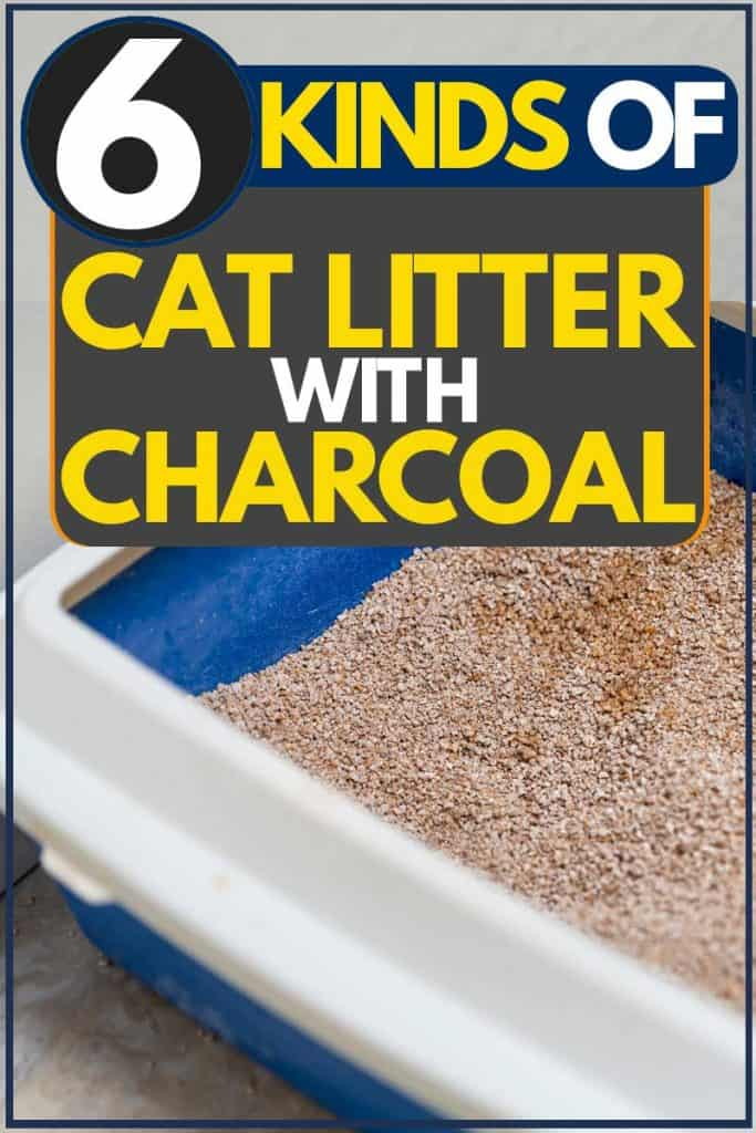 Blue and white litter box with sand inside intended for cat litter, 6 Kinds of Cat Litter with Charcoal