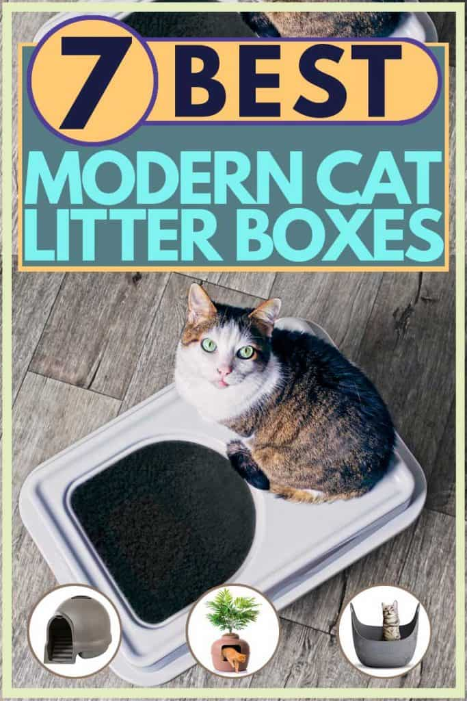 Tabby cat standing on top of litter box while staring at camera, 7 Best Modern Cat Litter Boxes