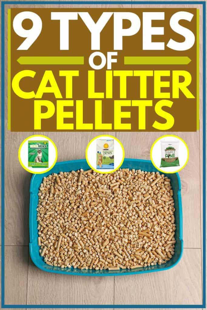 Cat litter pellets on litter box placed on floor, 9 Types of Cat Litter Pellets