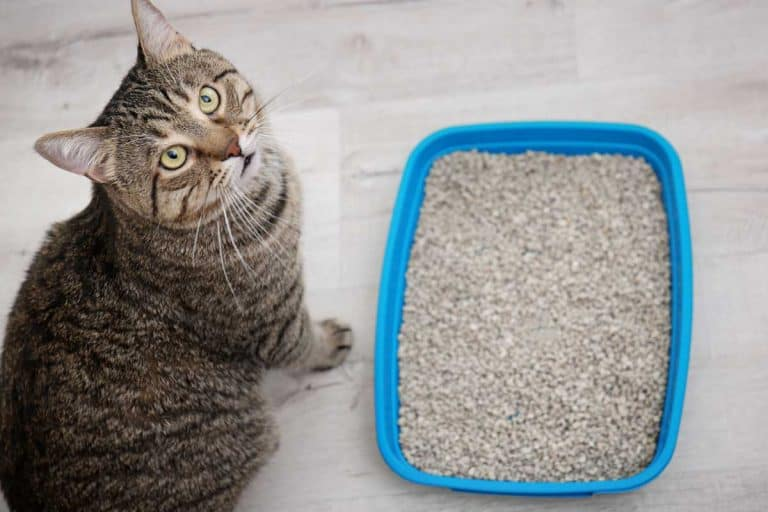 Does Cat Litter Dissolve in Water?