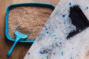 Read more about the article Does Cat Litter Contain Silica?