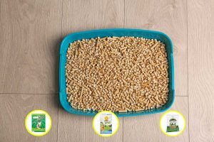 9 Types of Cat Litter Pellets