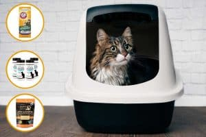Top 8 Litter Box Deodorizers