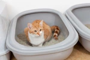 Cat pooping inside litter box, Moldy Cat Poop? Here is What to Do