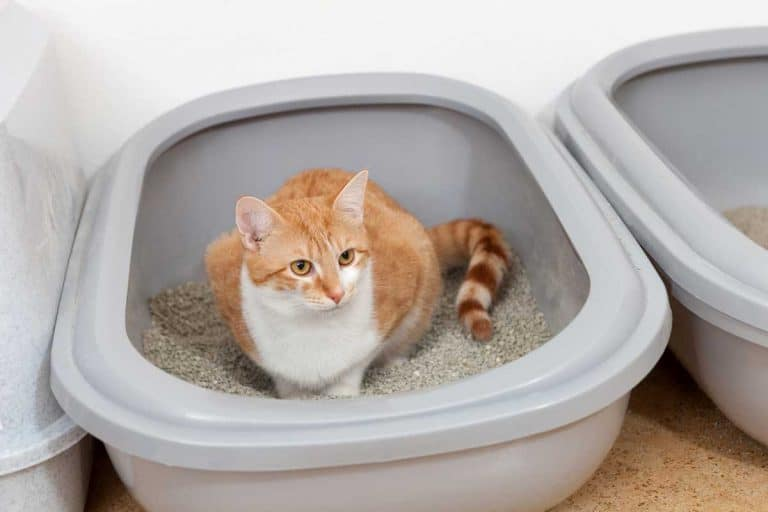 Moldy Cat Poop? Here is What to Do