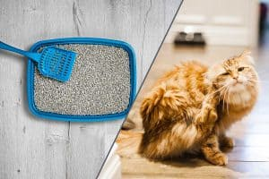 Fleas in the Litter Box – What to Do?