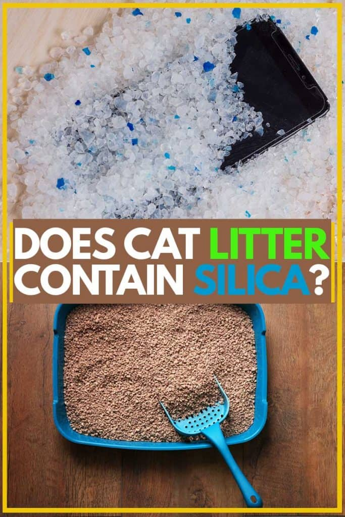 Cat litter placed on the floor with small blue shovel, Does Cat Litter Contain Silica?