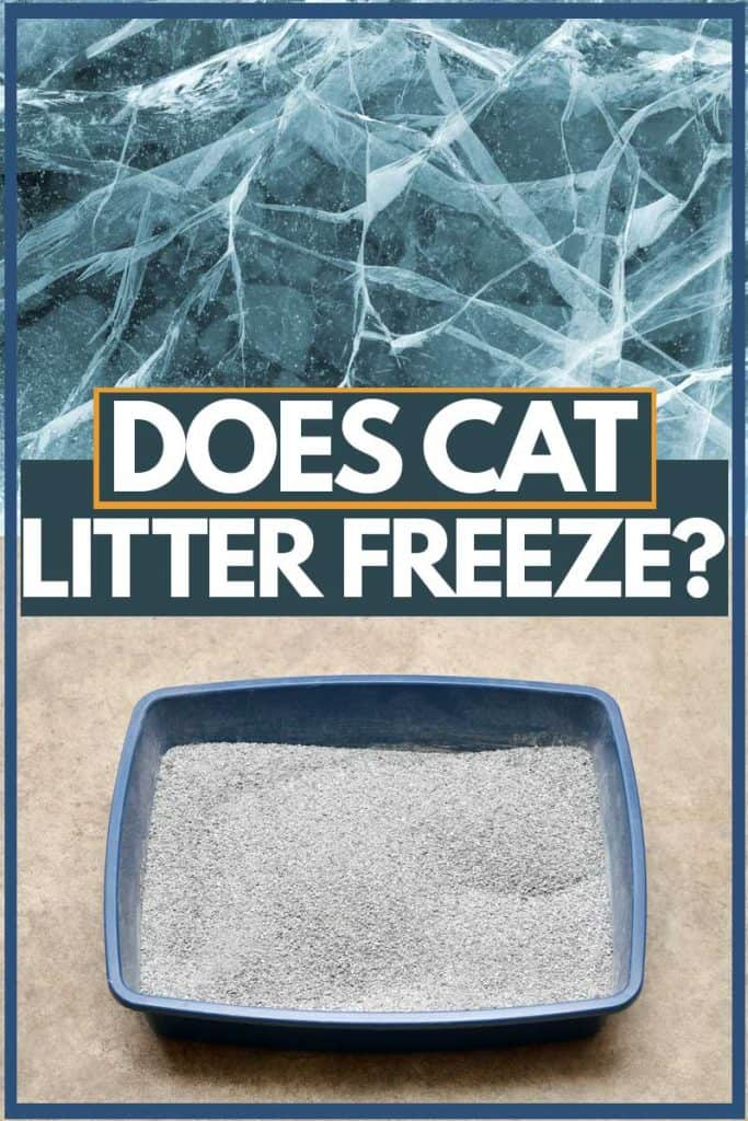 Cat litter freezing due to low temperature, Does Cat Litter Freeze?