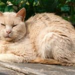 Senior Cat Not Using Litter Box – What to Do?