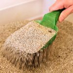 How Often Should You Change Clumping Cat Litter?