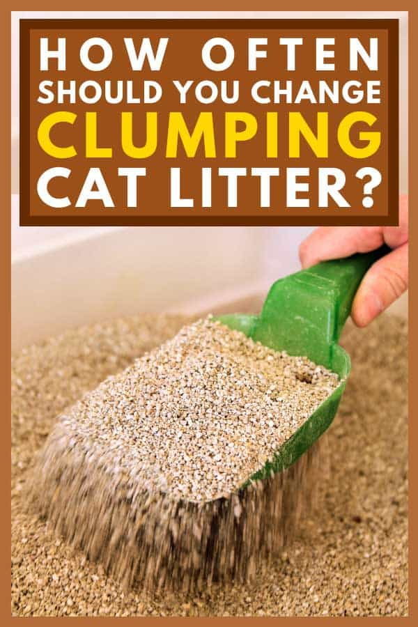 Cleaning cat litter box with green spatula, How Often Should You Change Clumping Cat Litter?