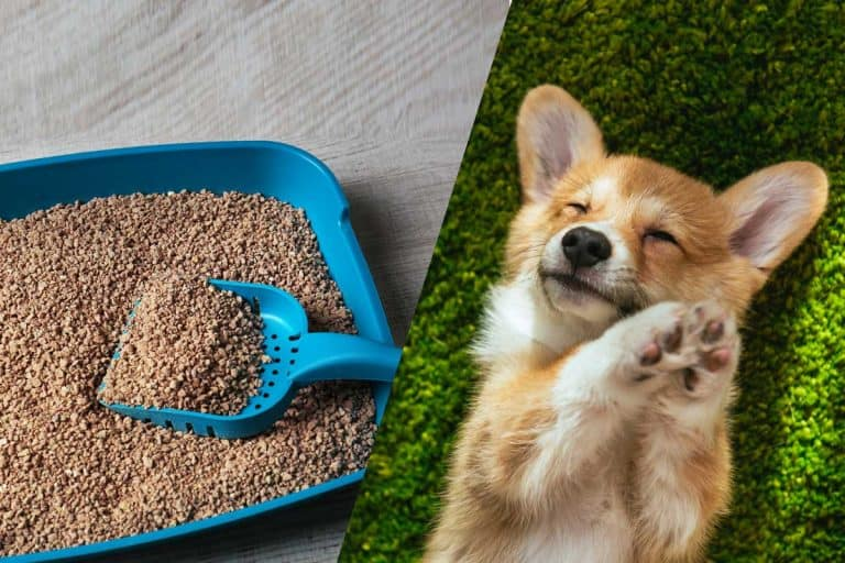 Is Cat Litter Bad for Dogs?