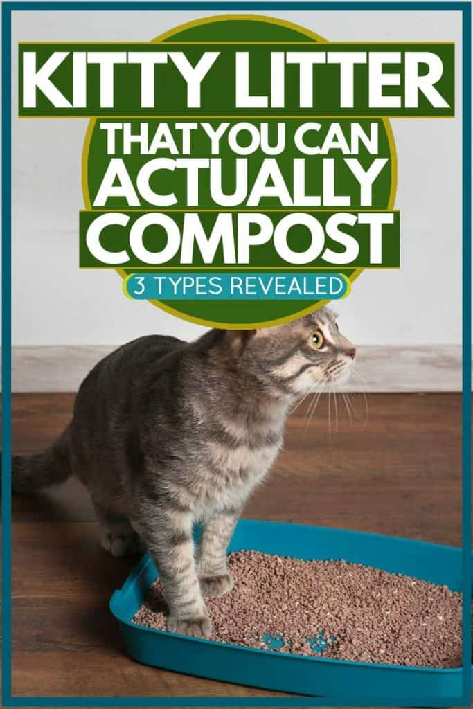 Cat putting both paws on litter box and staring at something, Kitty Litter That You Can Actually Compost [3 types revealed]