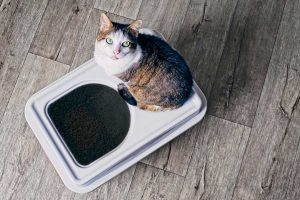 7 Best Modern Cat Litter Boxes