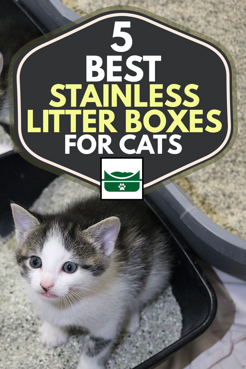 Cute small kiten is sitting in a stainless litter box and looking up, 5 Best Stainless Steel Litter Boxes for Cats