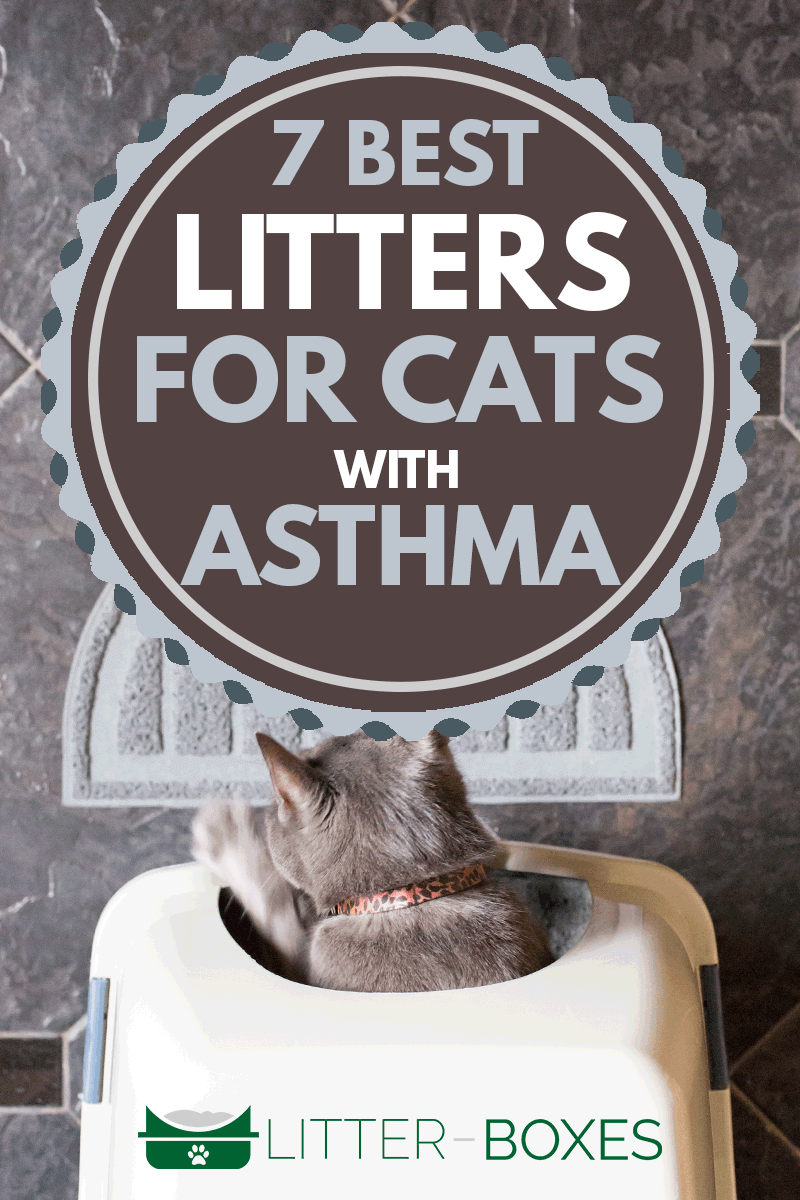 A gray kitten scratching in a litterbox, 7 Best Litters For Cats With Asthma