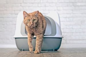 Read more about the article How Many Litter Boxes Should You Have for One Cat?