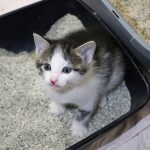 5 Best Stainless  Steel Litter Boxes for Cats