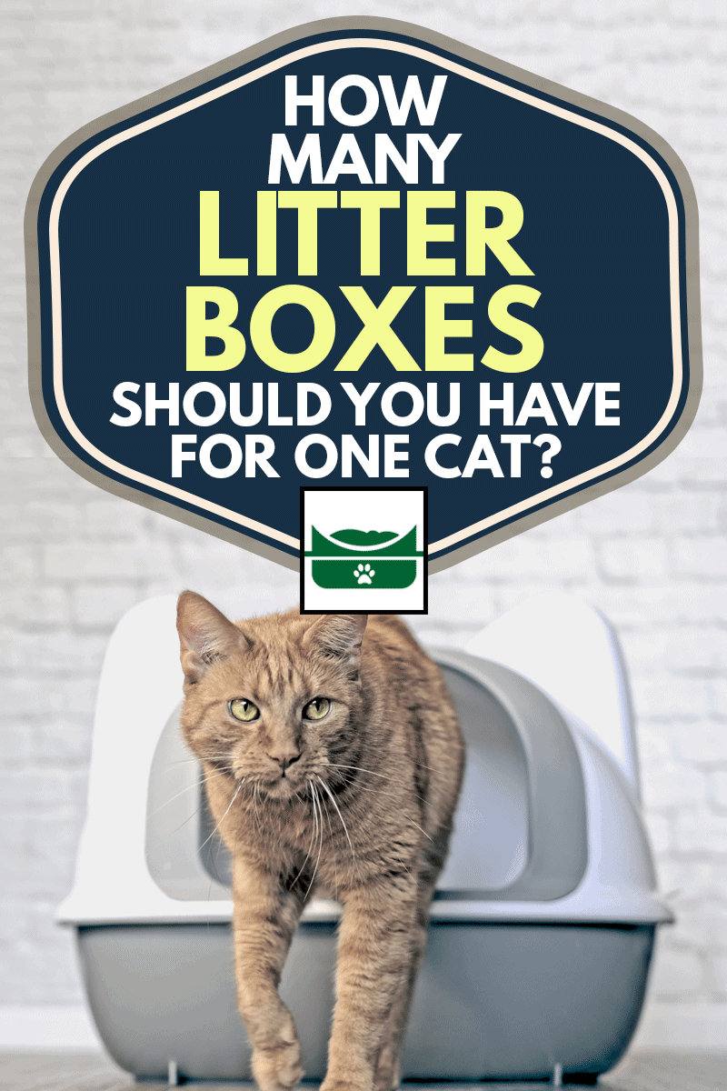 Cute ginger cat going out of a litter box, How Many Litter Boxes Should You Have for One Cat?