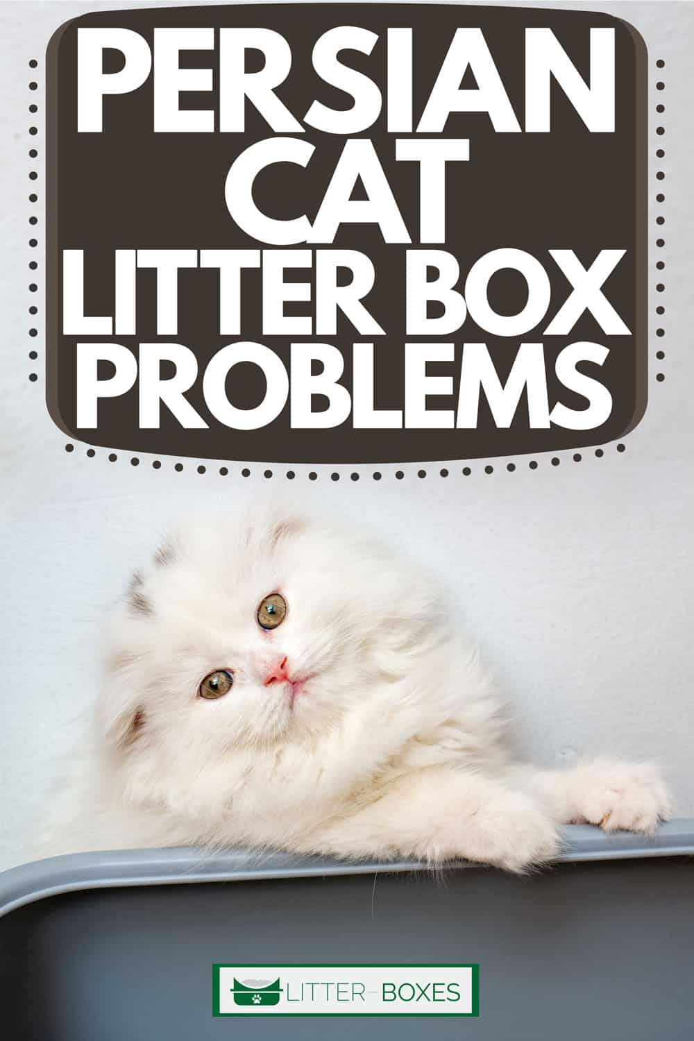A white Persian cat looking at the camera, Persian Cat Litter Box Problems