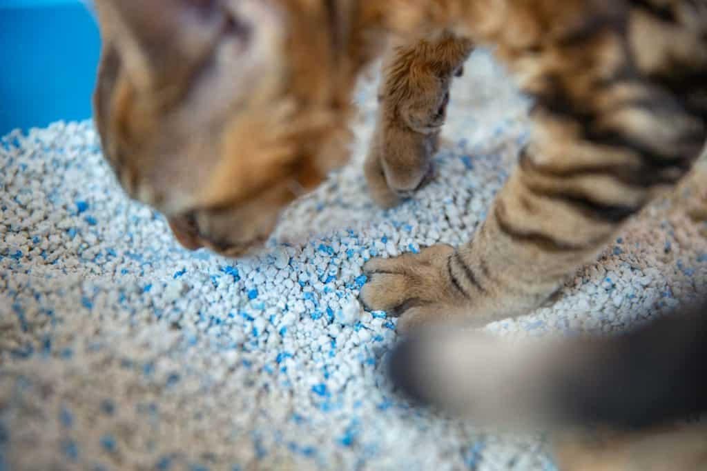 A cute cat smelling his litter