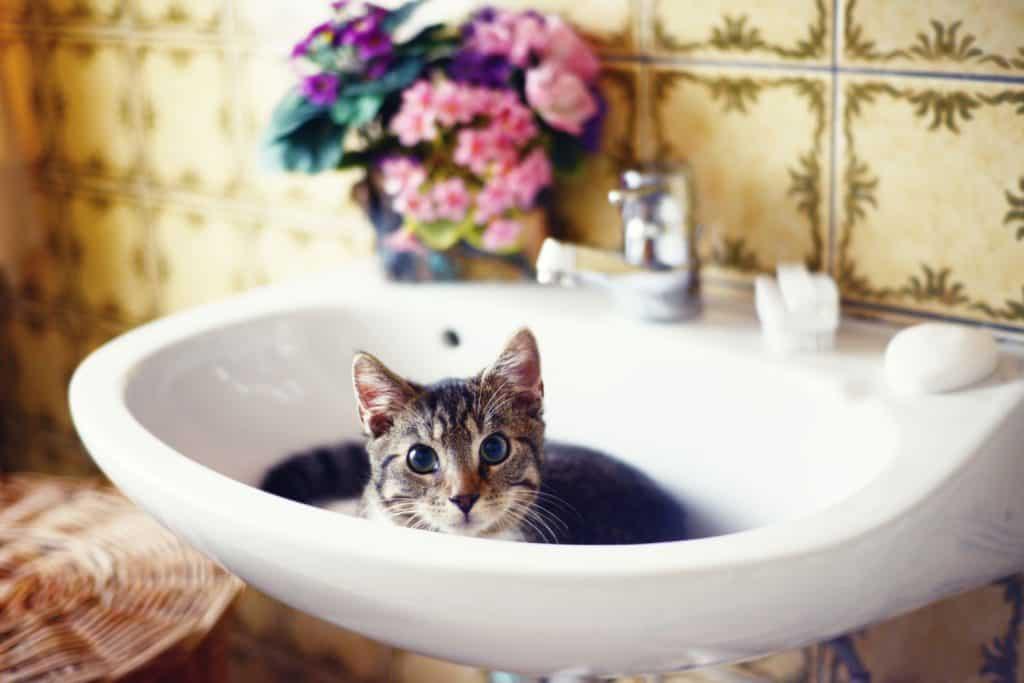 A cute tabby cat lying on the lavatory