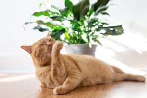 Cat Smells Like Poop – What to Do?