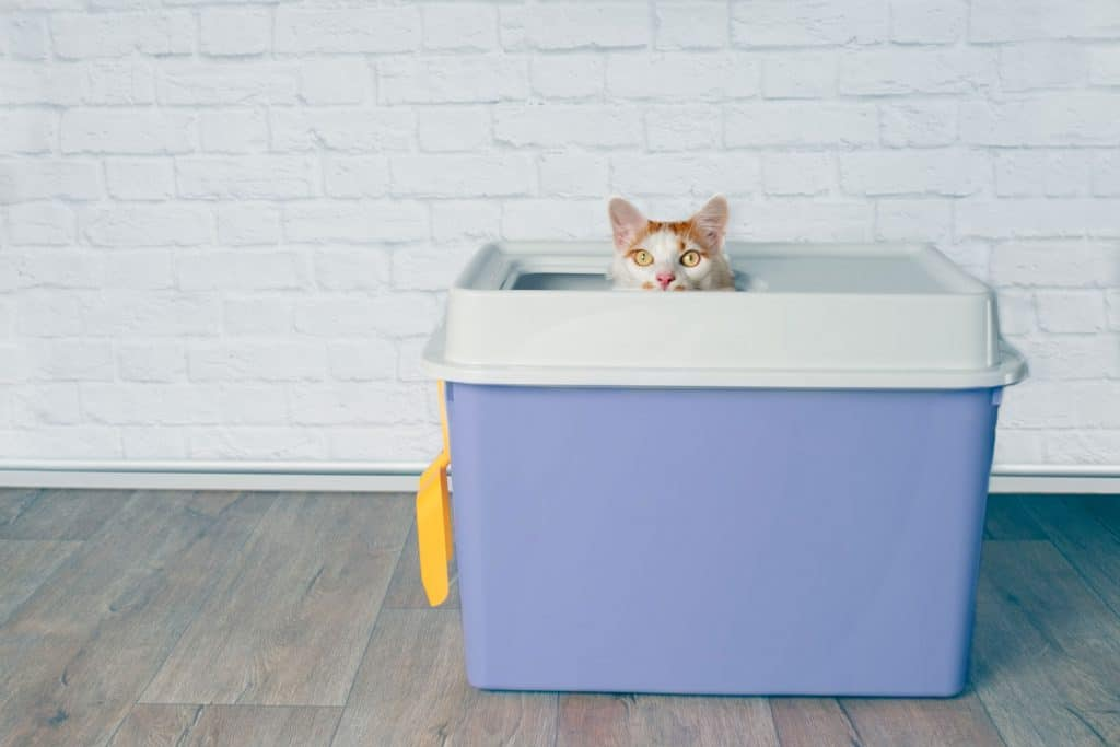A cat peeping outside his litter box