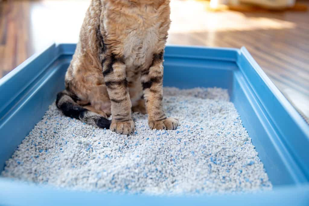 A cat sitting in his litter box