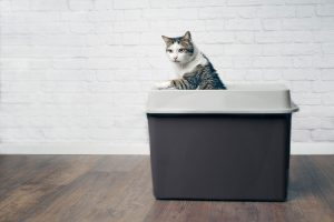 A cat standing up his litter box, Can Declawed Cats Use Clay Litter?