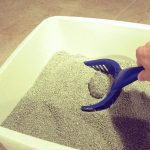 Does Clumping Litter Last Longer?