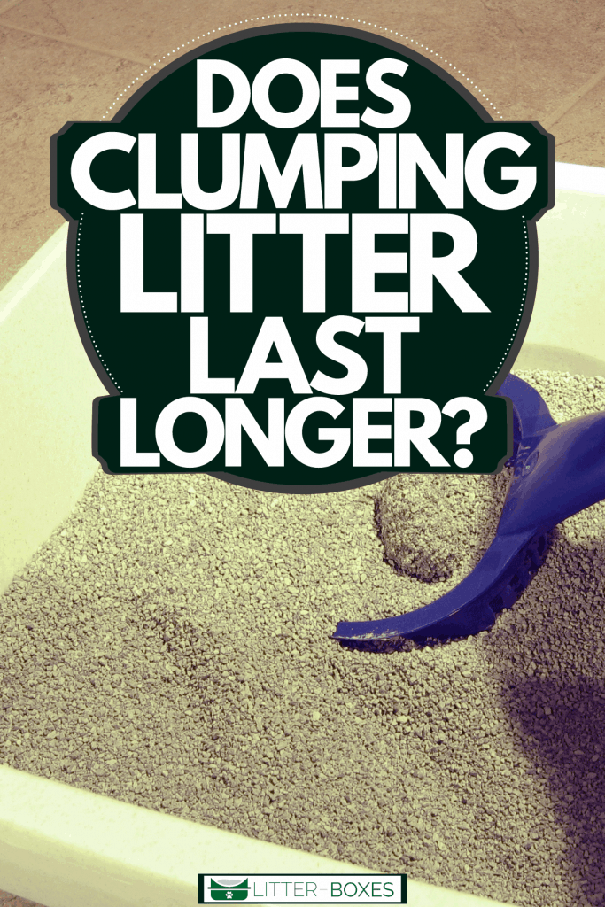 A woman scooping a clumped cat litter, Does Clumping Litter Last Longer?