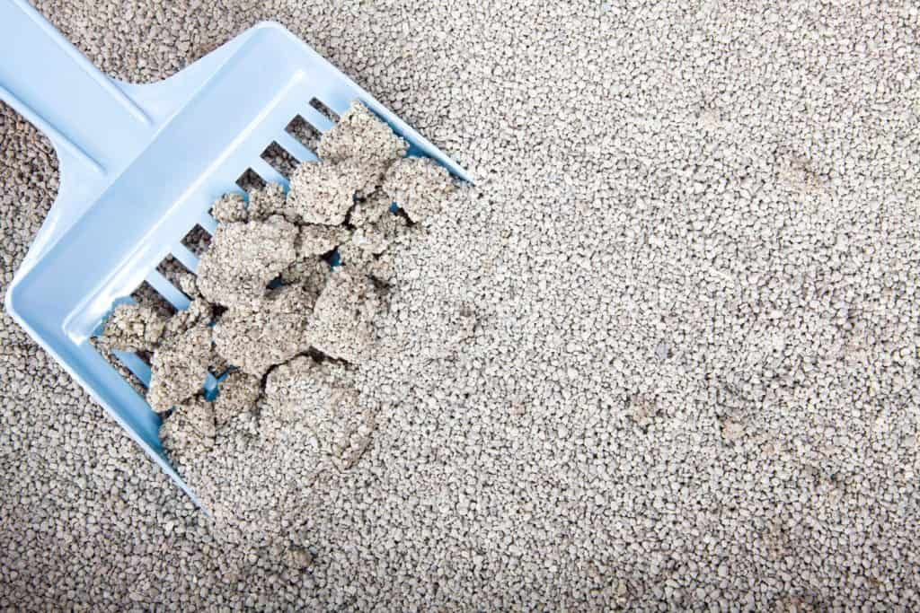 Scooping clumped cat litter